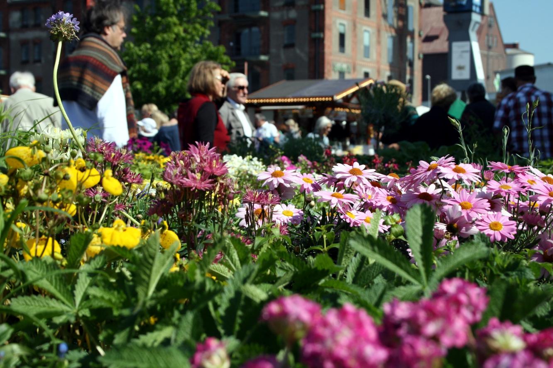 lenzmarkt – blumen, pflanzen und mehr